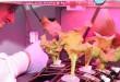201702191010172807_Cabbage-harvested-aboard-space-station-Nasa_SECVPF