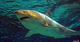 shark-attack-1